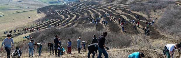 Peste 1.500 de voluntari din 20 de localitati au participat la Plantarea Padurii Transilvania