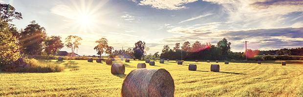 Banca Transilvania acorda fermierilor credite pentru culturile afectate de seceta