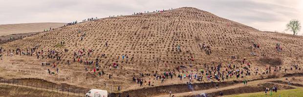 800 de voluntari, 22.000 de puieti, 5 hectare, o noua padure la Tritenii de Sus, Cluj